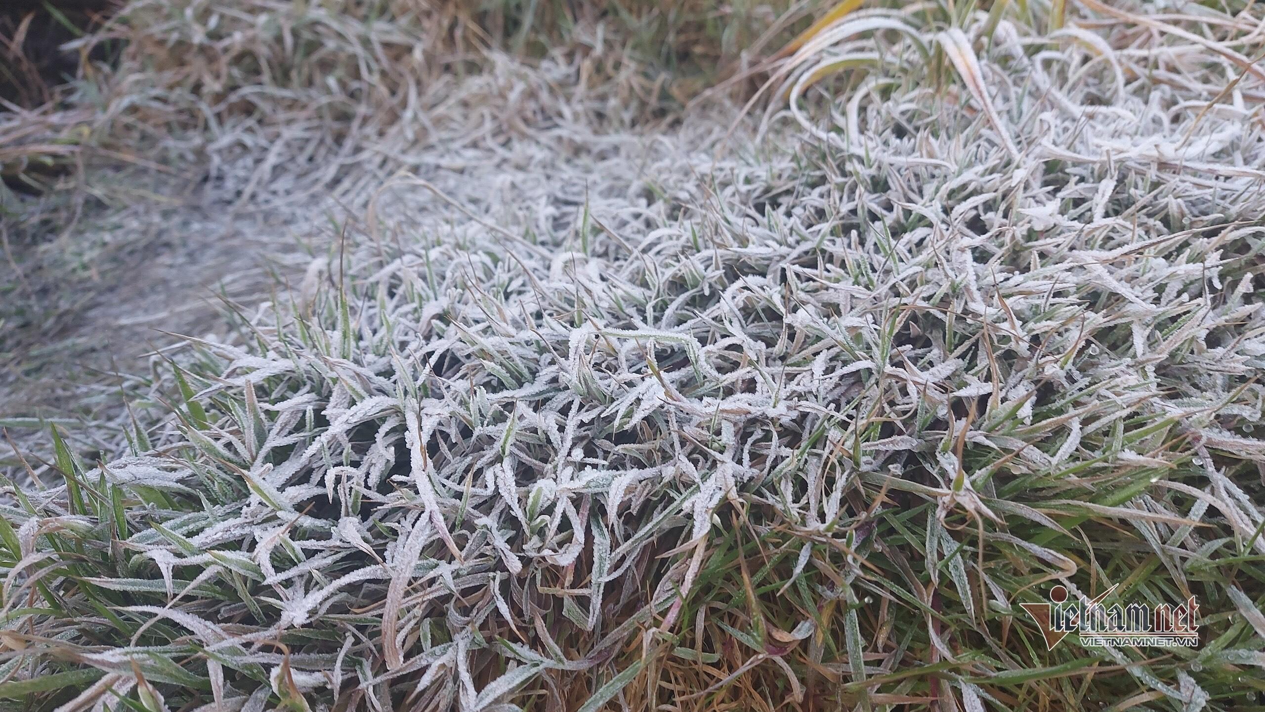 Nhiệt độ xuống dưới 0 độ C, băng tuyết phủ trắng núi rừng Fansipan