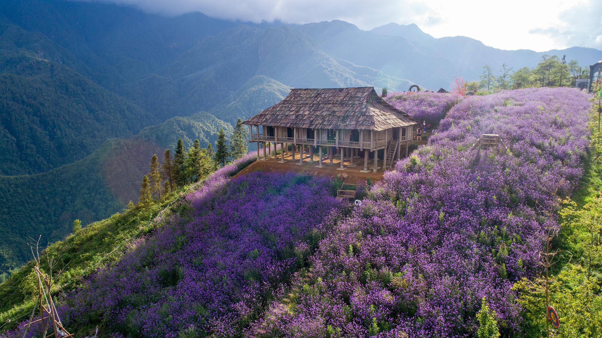 Thung lũng hoa tím tại Sun World Fansipan Legend