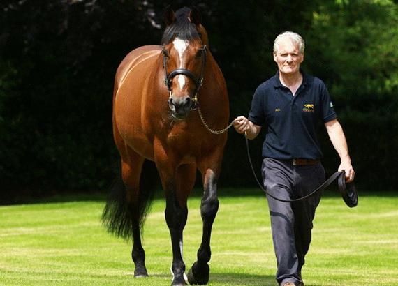 Chân dung chú ngựa đắt giá nhất thế giới