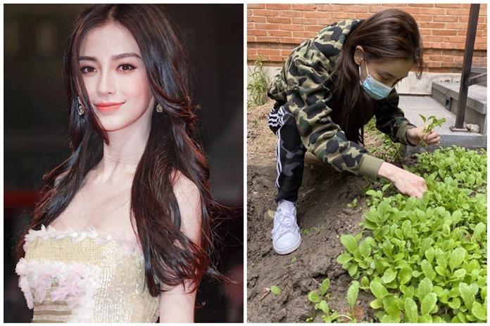 Angela Baby trồng rau mùa dịch, Tiêu Chiến tay trong tay với Dương Tử